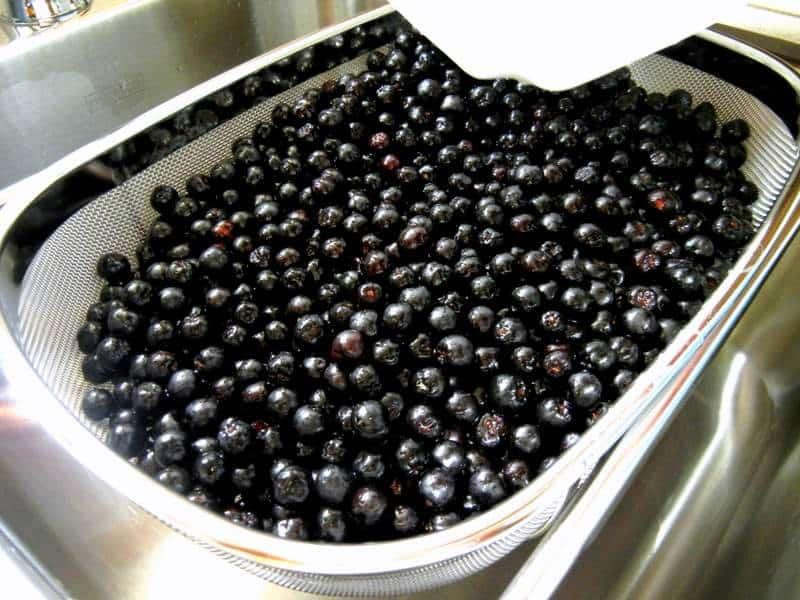 Aronia Berry Gaining Market